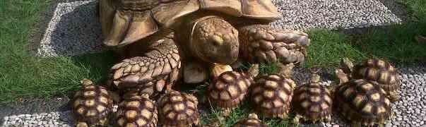 Gli anziani e le tartarughe